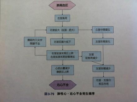 肺性心発生機序2